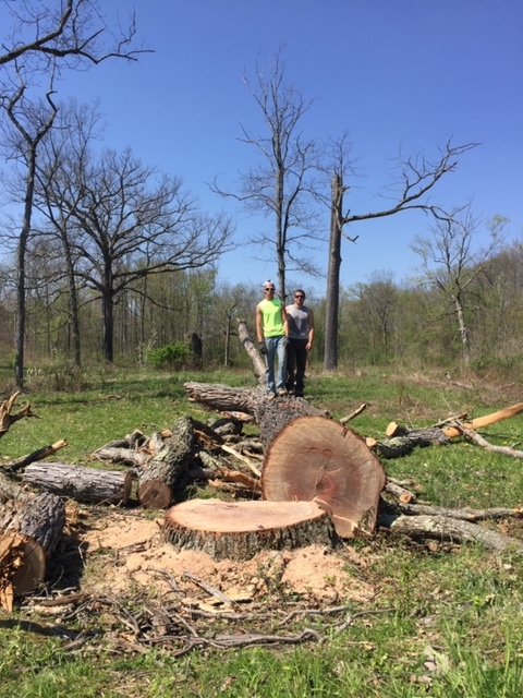 Baird's Tree Service LLC